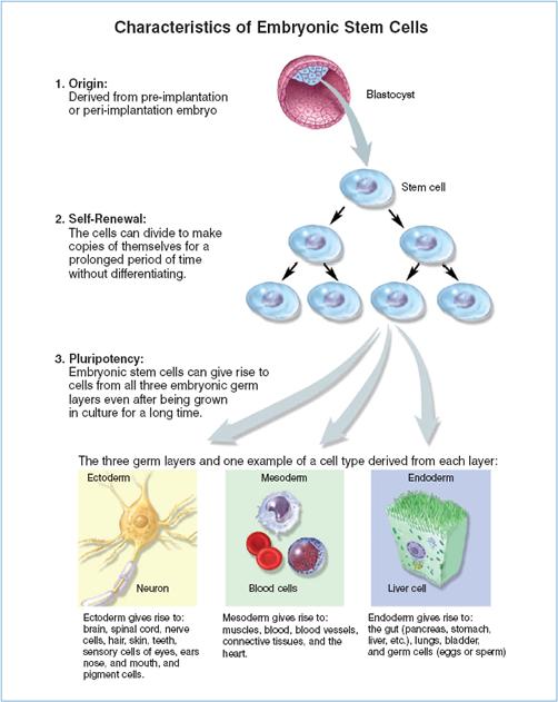 Developmental Biology Research Highlights Anat456