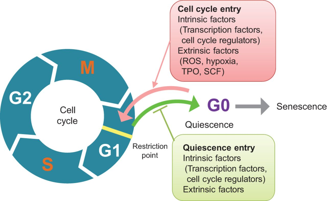 research papers regulation cell cycle All hormones that act by regulation of gene expression have two widespread use of the term has been traced to a 1980 review article by rodbell: research papers focusing on signal transduction first appeared in large numbers in the late cell cycle - homo sapiens (human.