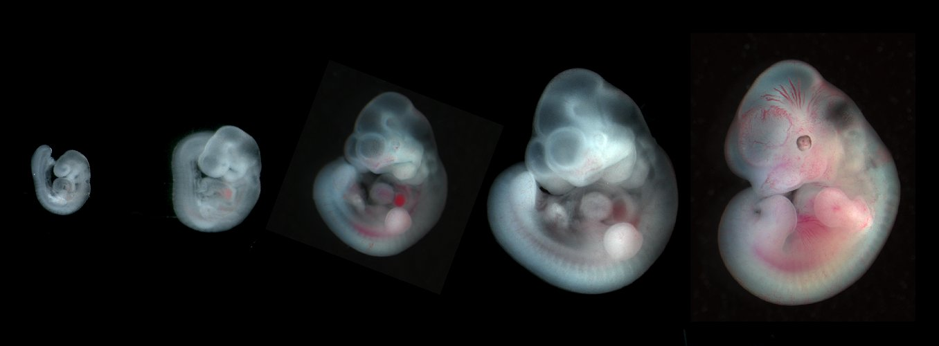 Aninimal Book: Developmental Biology Research Highlights | Anat456 ...