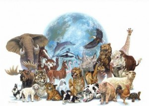 A colour collage of threatened species