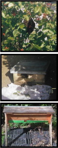 3 photos of bee hives