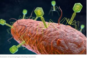 graphic of sausage-shaped bacteria with pin-like viruses attached