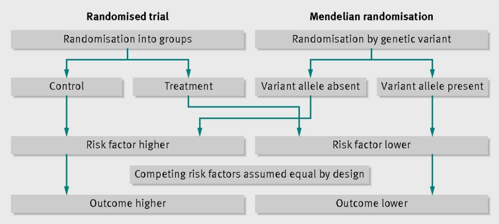Caption: A diagram from the BMJ showing how Mendelian randomisation works like an RCT (source: Burgess et al, 2012, doi: http://dx.doi.org/10.1136/bmj.e7325)