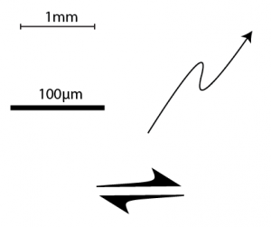 some symbols: scale bars and arrows